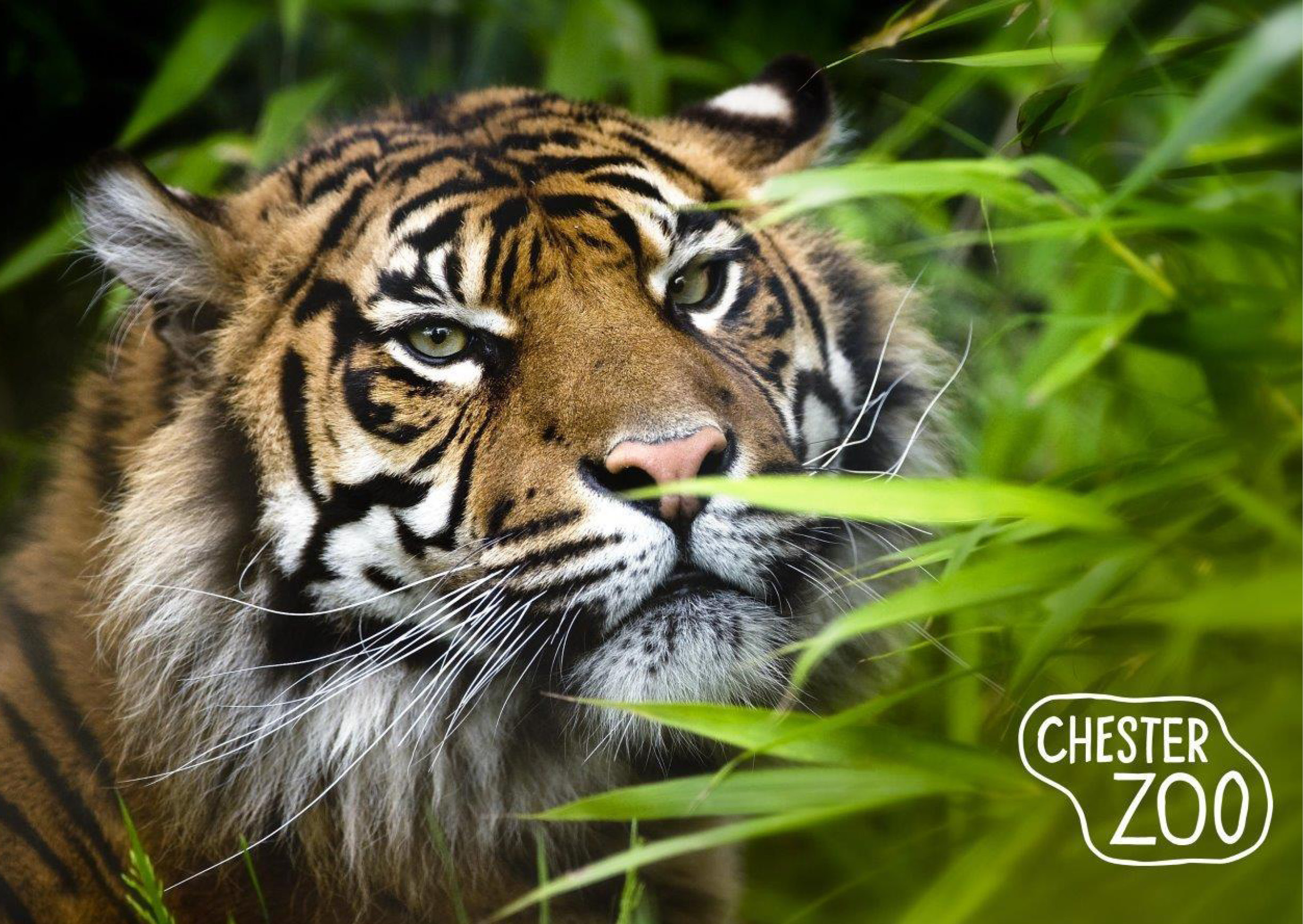 Chester Zoo Review!