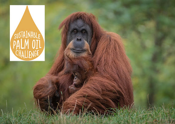 Sustainable Palm Oil Champions
